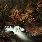 Laurel Creek Cascades by kathy s gillentine