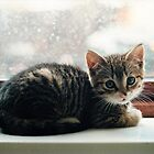 Kitten In The Window by joerelic37