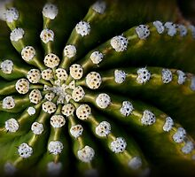 Nature's Spiral by Lucinda Walter