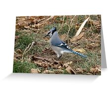 Blue Jay - A Dapper Fellow Greeting Card