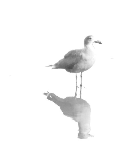 Gull and Reflections in Black and White by Corri Gryting Gutzman