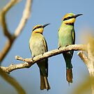 The Bee Eater by cs-cookie
