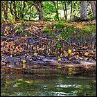 Cudgen Creek 7 by John Van-Den-Broeke