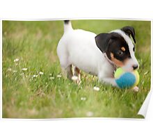 Sammie at Play Poster