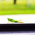 A grasshopper along for the ride... by Cindy Rogers