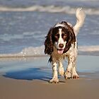 Beach Pup by Robin Lee