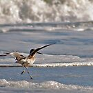 Clumsy Willet by Robin Lee