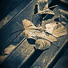 Leaves on bench by Silvia Ganora