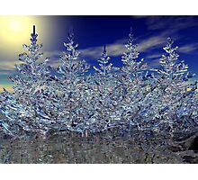 Winter Transformation Photographic Print