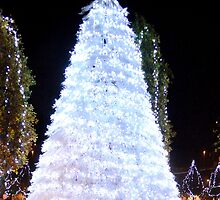 Christmas Tree by Steve