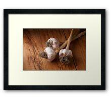 natural garlic  Framed Print