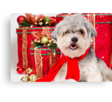 A nice Christmas for Cuddles Canvas Print