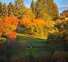 Fall in the UI Arboretum by Chad M