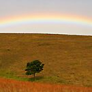 Alpha Tree Rainbow by Masterclass