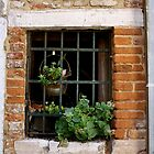 Window, Venice by Barbara Wyeth