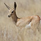 Young Springbok by Will Hore-Lacy