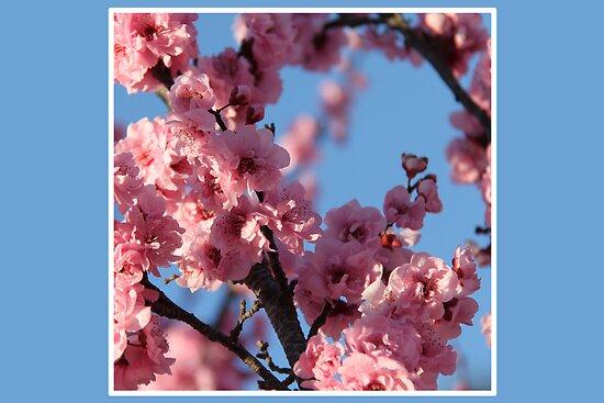 Blossom Me Tree by Emma Holmes