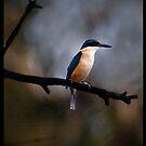 Kingfisher by Anna Ryan