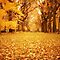 Autumn Leaves - Central Park - New York City by Vivienne Gucwa