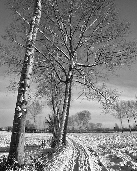 Farm track and Poplars in Winter by Steven House