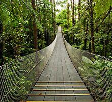 Tropical Forest Suspension Bridge by mylitleye