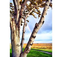 Touch of Eden Photographic Print