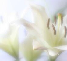 White Lillies by WestawayStreet
