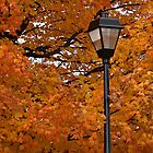 Bright Tree and Lamp Post~ by Virginian Photography (Judy)