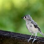 Little Gray Bird by mhm710