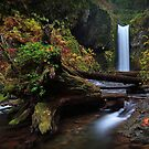 Wiesendanger Falls I by Tula Top