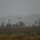 Snow Geese by Lee LaFontaine