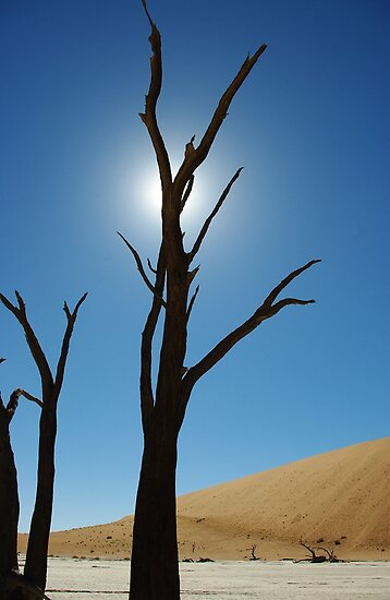blue sky in Sossusvlei  by Martina  Stoecker