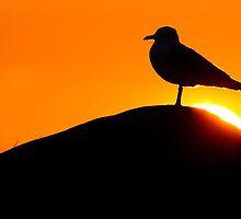 Caress of the Sun  by Remo Savisaar