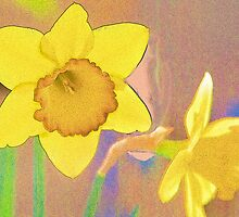 Textured Daffodils by Joy  Rector