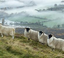 Early morning mists and sheep on Longside edge, near Skiddaw by Annabelle Studholme