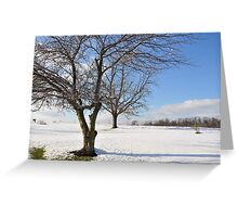 Winter trees 11/30/2011 Greeting Card