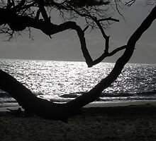 Moonlit Beach by Chuckc