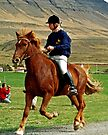Icelandic horse and rider by Margaret  Hyde
