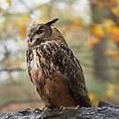 Autumn colours + Long Eared Eagle Owl by anniek1947
