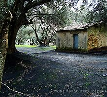 Home of the olives by Fiona Mouzakitis
