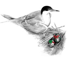Nesting Tern Gifts by Tamara Clark
