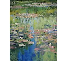 Water Lily Pond Photographic Print