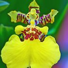 Whatkinda Orchid (Dancing Lady) by Glenn Cecero