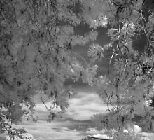 Infrared Photo - A Summer day by paulaross