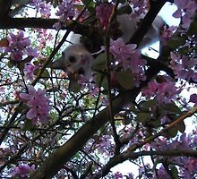 Naughty the Cat up a tree by julieannlegg