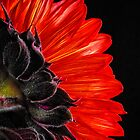 Red Sunflower VII  by Saija  Lehtonen