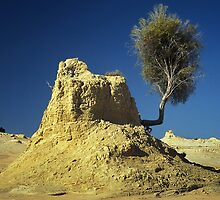 Natures way - Lake Mungo by Hans Kawitzki