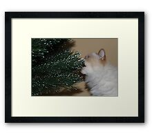 Is this a food item? Framed Print