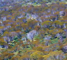 Grey gums at Charlotte Pass, NSW by Paul W. Kerr
