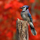 Autumn Glory by Bill McMullen